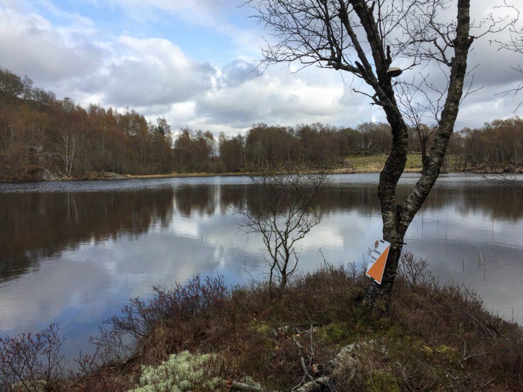 Bilde av orienteringsmarkør i landskap ved tjern.